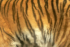 Tiger texture Stock Images