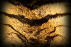 Tiger textured fur with vignette royalty free stock images