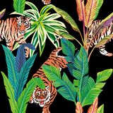 Tiger in the tropical jungle black background. Seamless composition of the wild predatory animals tiger in the tropical jungle. Vector illustration of a print Royalty Free Stock Photo