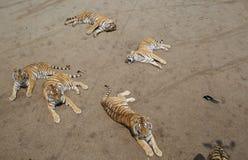 Tiger und Elster Stockbild