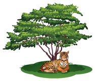 A tiger under the tree Royalty Free Stock Photography