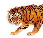 Tiger - vector Stock Photos