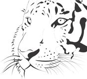 Tiger Vector Animal Illustration Zoom Face. Realistic tiger face zoom. Illustration in black lines Royalty Free Stock Image