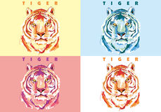 Tiger Vector Stock Photos