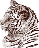 Tiger. Vector drawing of a tigers head Stock Photo