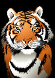 Tiger. Stock Photography