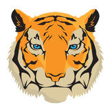 Tiger vector illustration Royalty Free Stock Images