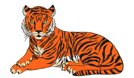 Tiger vector illustration Royalty Free Stock Photos