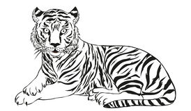 Tiger vector illustration Stock Image