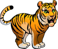 Tiger. Vector illustration Royalty Free Stock Images