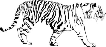 Tiger royalty free illustration