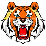 Tiger vector. For wallpaper wall Royalty Free Stock Photos
