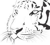 Tiger Vetora Animal Illustration Zoom enfrenta ilustração royalty free