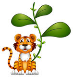 A tiger beside a vine Royalty Free Stock Image