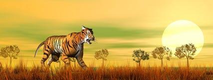 Tiger walking in the savannah - 3D render Royalty Free Stock Photos