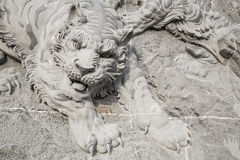 Tiger on  wall by stone carving Stock Image