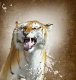 Tiger Watercolor Royalty Free Stock Photo