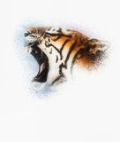 Tiger on white background wildlife animals. Stock Photos