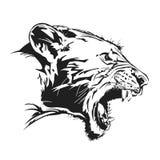 Tiger wild Stockbilder