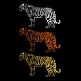 Tiger  wild illustration strength mammal wildlife graphic. Carnivore Stock Photos