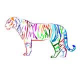 Tiger  wild illustration strength mammal wildlife graphic. Carnivore wildcat Stock Photo