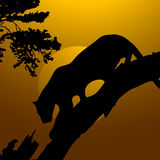 Tiger,wildlife. Silhouette view of tiger,wildlife Stock Photography
