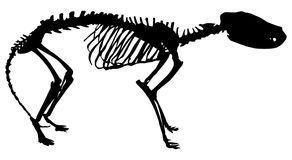 Tiger-wolf skeleton silhouette isolated on white Royalty Free Stock Images