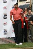 Tiger Woods Στοκ Φωτογραφία