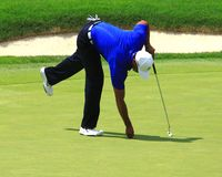 Tiger Woods на зеленом цвете Стоковая Фотография RF