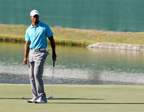 Tiger Woods. Johns Creek, Georgia, USA - August 10, 2011: Tiger Woods waits to putt during practice rounds at the 2011 PGA Championship tournament Royalty Free Stock Photo