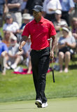 Tiger Woods Photos libres de droits