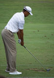 Tiger Woods Stock Images