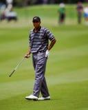 Tiger Woods Стоковое Изображение RF