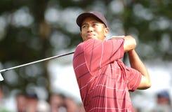 Tiger Woods foto de archivo