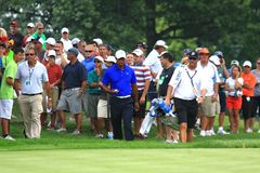Tiger Woods American golfer. Tiger Woods retrieves his ball after hitting it out of bounds at the PGA professional golf event, Northeast Ohio, United States Stock Photo