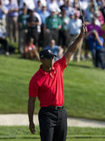Tiger Woods ganha o memorial Foto de Stock