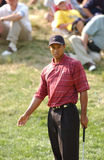 Tiger Woods Royalty Free Stock Images