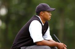 Tiger Woods Professional Golfer foto de archivo libre de regalías