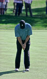 Tiger Woods' putting stance. Royalty Free Stock Image