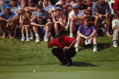 Tiger Woods Reading the Greens. Tiger Woods crouches down to read the greens prior to attempting a putt. (Image taken from color slide Royalty Free Stock Photo