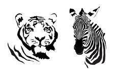 Tiger_zebra Стоковые Изображения