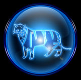 Tiger Zodiac icon Royalty Free Stock Images
