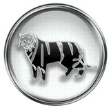 Tiger Zodiac icon grey Stock Photo