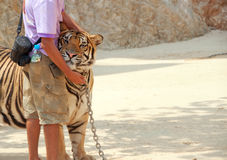 Tiger and zoo keeper Stock Photo