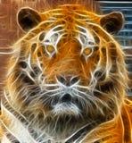 Tigerabbildung stockfotografie