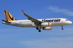 Tigerair obrazy stock