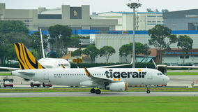 Tigerair flygbuss 320 som åker taxi på den Changi flygplatsen Royaltyfri Foto