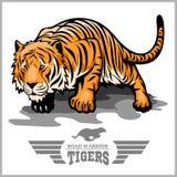 Tigerattack - sportmaskotstil Royaltyfria Foton