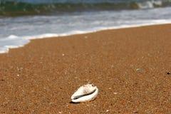 Tigercowrie-Shell auf einer Seelandschaft Lizenzfreie Stockbilder