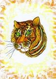 tigerella Image libre de droits